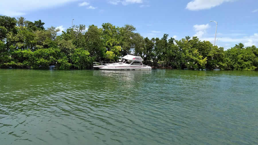 Partially submerged boat along mangroves.